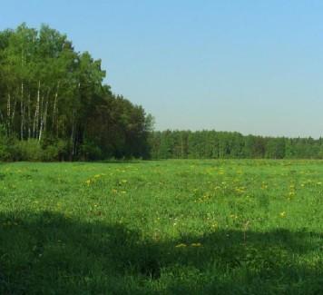 На что обратить внимание при покупке земли